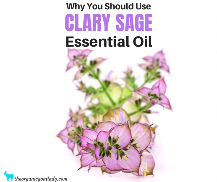 Why You Should Use Clary Sage Essential Oil