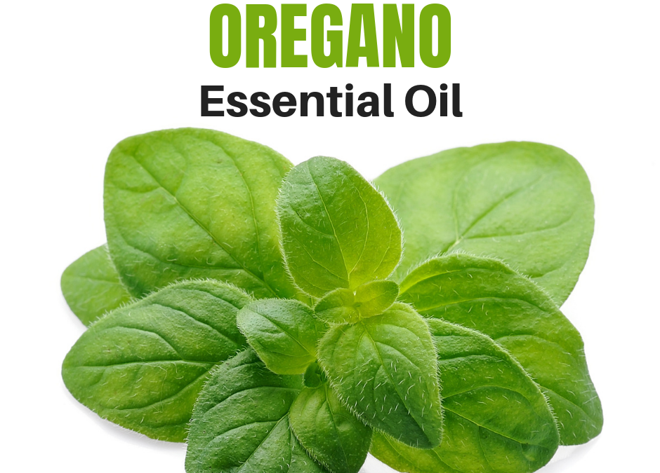 Why You Should Use Oregano Essential Oil
