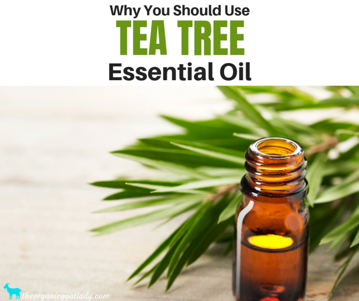 Why You Should Use Tea Tree Essential Oil