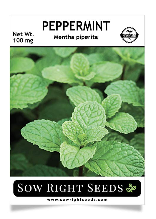 Sow Right Seeds - Peppermint Seeds for Planting - Non-GMO Heirloom Seeds - Full Instructions for Easy Planting and Growing an Herbal Tea Garden, Indoors or Outdoor; Great Gardening Gift (1)