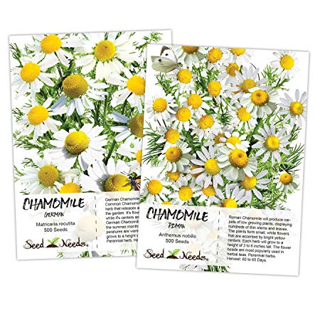 Seed Needs, Chamomile Seed Duo (Roman/German) Non-GMO