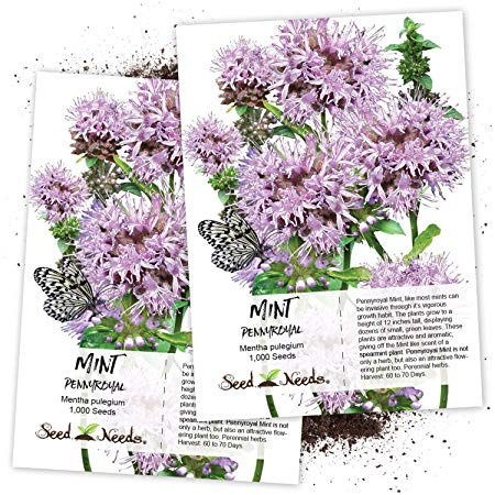 Seed Needs, Pennyroyal Mint (Mentha pulegium) Twin Pack of 1,000 Seeds Each Non-GMO