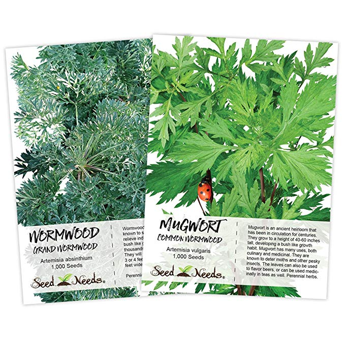 Wormwood Seed Duo, (2 Individual Seed Packets) Non-GMO Seeds by Seed Needs