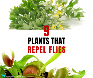 Plants That Repel Flies