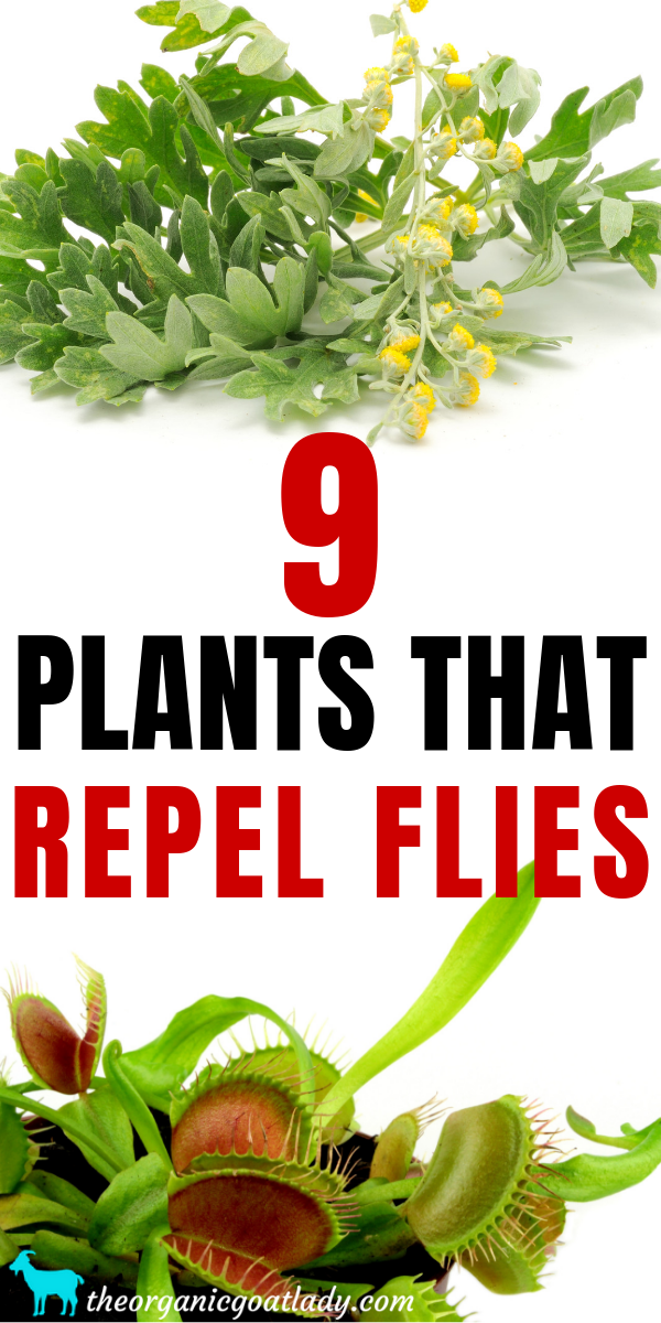 9 Plants That Repel Flies