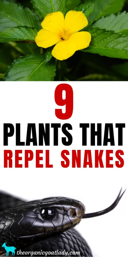 Plants That Repel Snakes