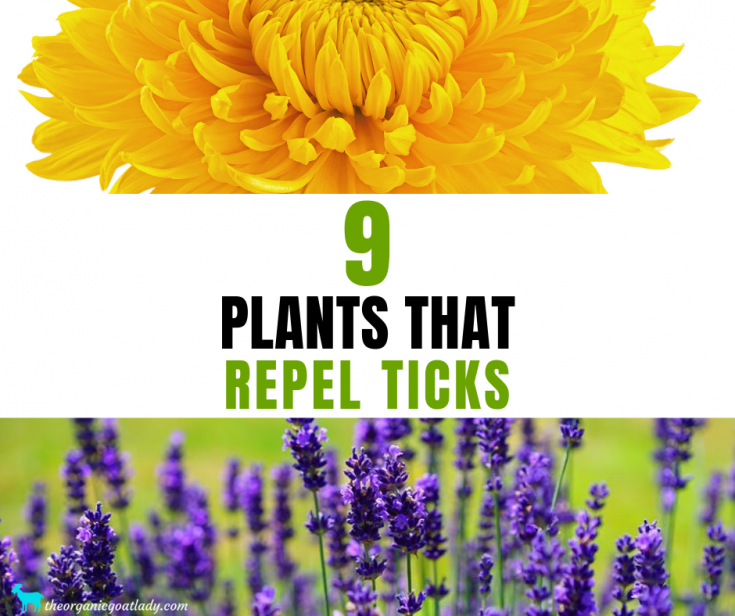 9 Plants That Repel Ticks