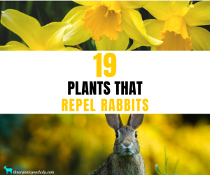 Plants That Repel Rabbits