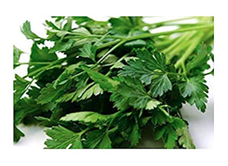 Italian Giant Parsley Seeds, 200+ Premium Heirloom Seeds, Top Selling Parsley Seed & ON SALE!, (Isla's Garden Seeds), Non Gmo Organic, Highest Quality Seeds, 90% Germination Rates, 100% Pure