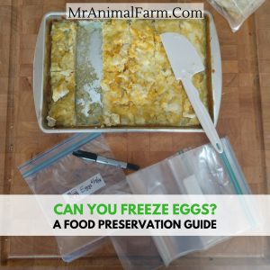 Can You Freeze Eggs - How to Freeze Eggs Raw, Baked Scrambled and More!