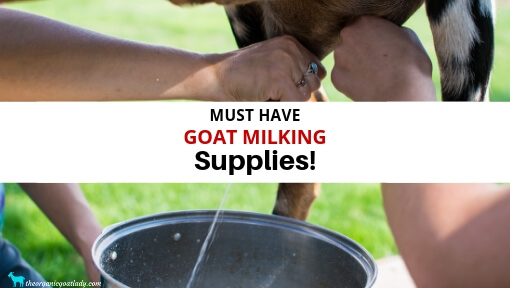 Goat Milking Supplies
