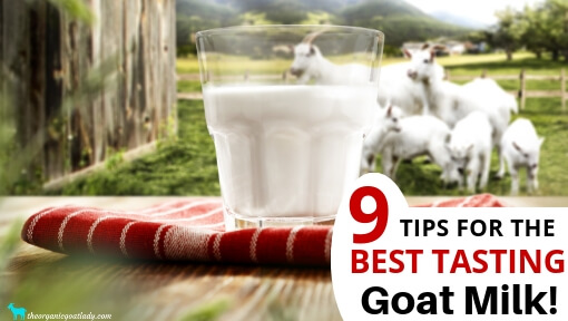 9 Tips for the Best Tasting Goat Milk!