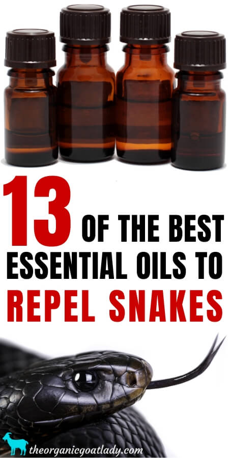 Essential Oils to Repel Snakes