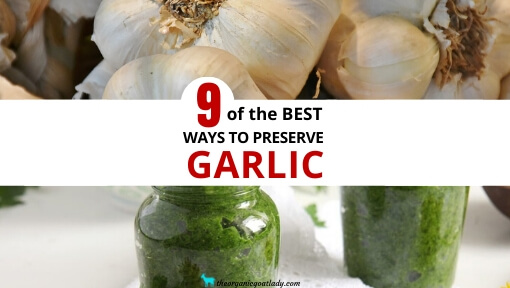 9 Ways to Preserve Garlic