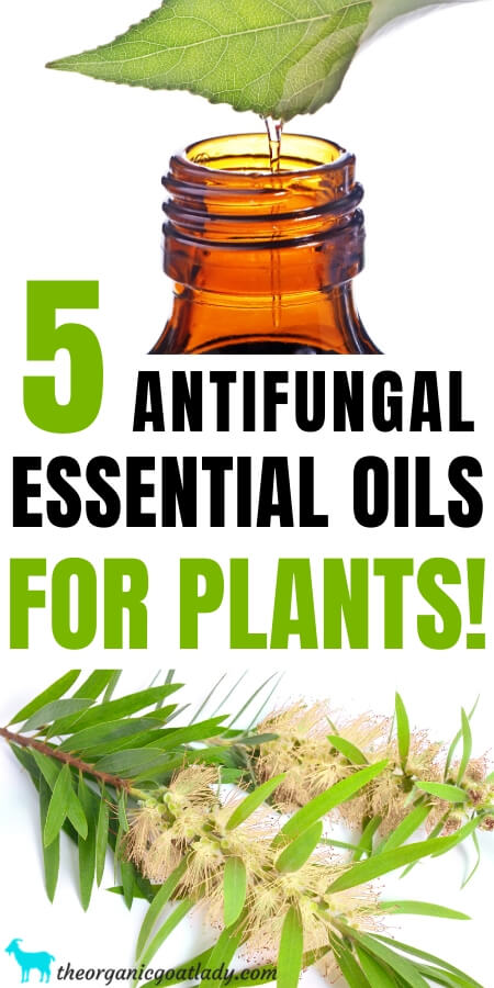 Antifungal Essential Oils for Plants
