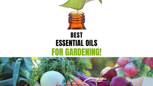 Best Essential Oils for Gardening