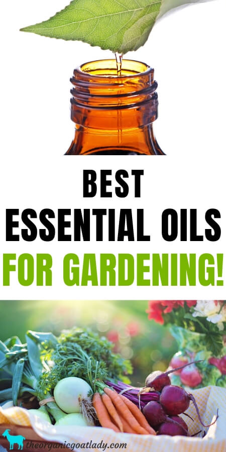 Essential Oils for Gardening
