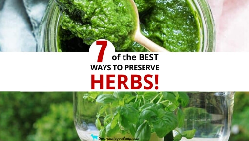 7 Ways to Preserve Herbs