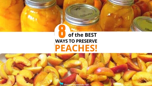8 Ways to Preserve Peaches