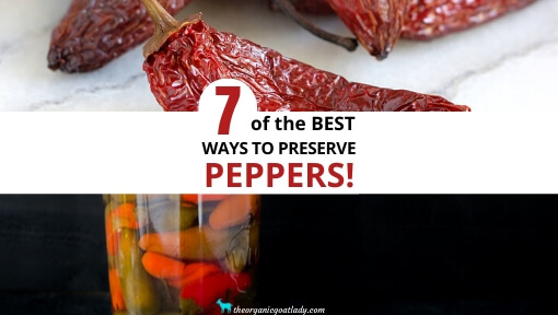 7 Ways to Preserve Peppers