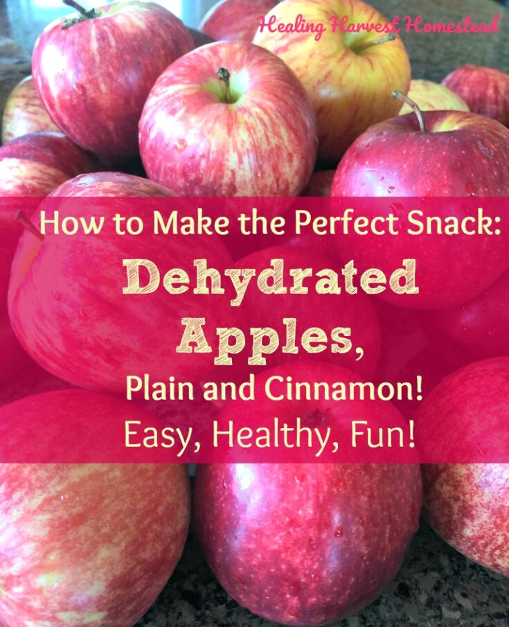 Make Dehydrated Apples--Plain and Cinnamon! (Super Healthy, Super Fun, Super EASY!) — Home Healing Harvest Homestead