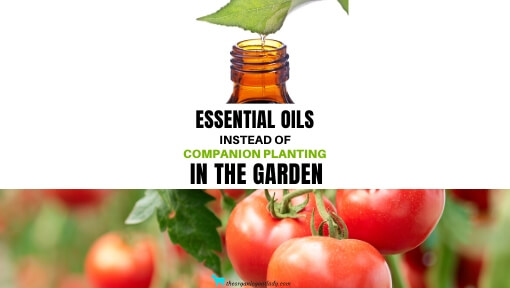 What Essential Oils are Good For Plants?