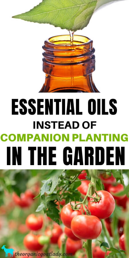 Which Essential Oils are Good For Plants