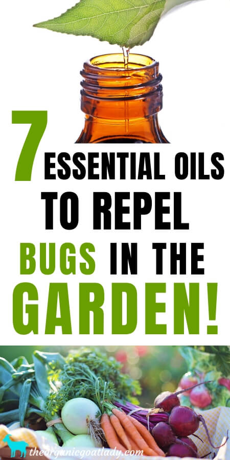 Essential Oils That Repel Bugs