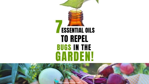 7 Essential Oils That Repel Bugs in the Garden!