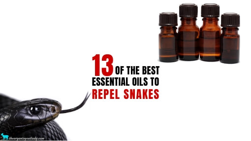 13 Essential Oils to Repel Snakes!
