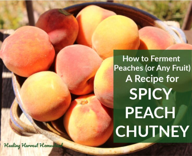 Fermented Cinnamon Peach Recipe: Spicy, Easy, and Delicious! (How to Ferment Peaches or Other Fruits with this Recipe) — Home Healing Harvest Homestead