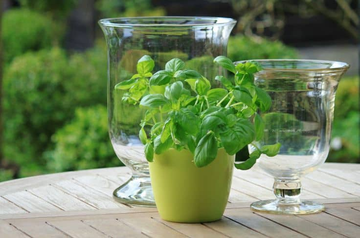 Tips for Storing Fresh Herbs When You Have Too Much
