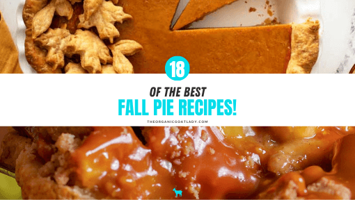 Best Fall Pie Recipes!